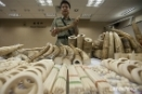 Hong Kong's ivory ban just a sliver of its wildlife crime