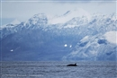 A chance for greater protection of the Arctic