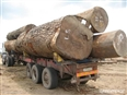 DRC Logging: 87% illegal says new study