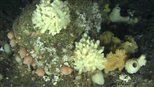 Greenpeace explores underwater canyons, calls for their protection