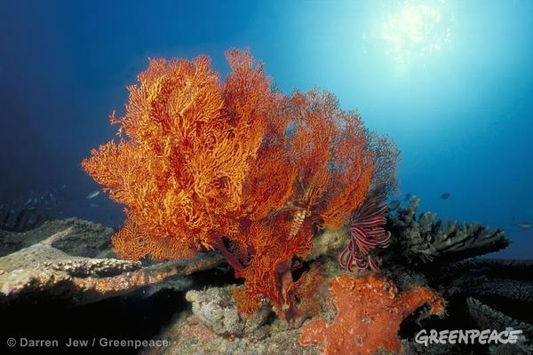 Coral in the Great Barrier Reef