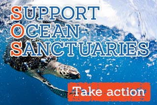 Support Ocean Sanctuaries