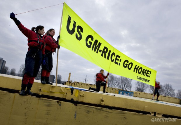 Greenpeace activists protest on a barge containing contaminated illegal GM rice shipped from the US in the harbour of Rotterdam. The environmental organisation released a report today, which reveals systematic contamination of food, feed and seeds wit...
