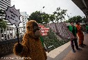 HSBC Stop Funding Forest Fires in Indonesia