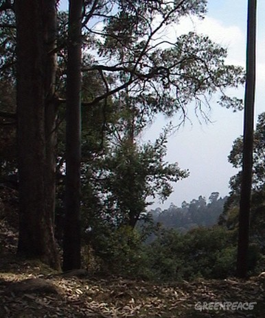 A view of the sensitive Pambar Shola forest area contaminated by mercury from the Hindustan Lever Limited thermometer factory in Kodaikanal.
