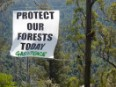World governments must stop destruction of forest and marine life