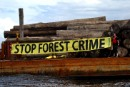 Greenpeace identifies suspected illegal logs