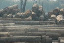 Merbau timber from Indonesia stored at the