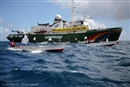 United we sail – Mauritian fishermen, Greenpeace protest against overfishing