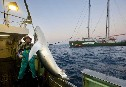 Rainbow Warrior In The Indian Ocean