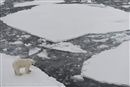 The melting Arctic must not be an excuse for a resource grab: UNEP