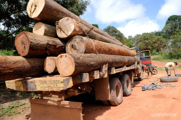 Timber on a truck near indigenous lands, Maranhão state. Logging in and around Indigenous Land is common.