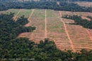 Herakles Farms: Champions of illegal deforestation
