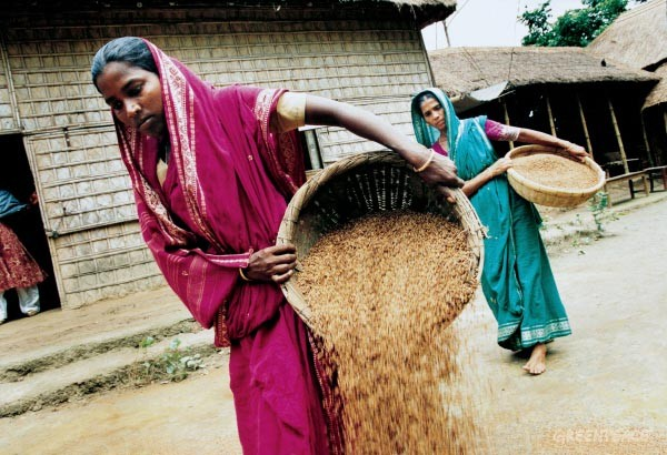 Women carrying baskets of seeds to dry them in the sun, Nayakrishni centre, Bangladesh.