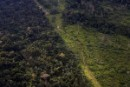 Lowest Deforestation Rate in Brazil Should Inspire Decisions on REDD