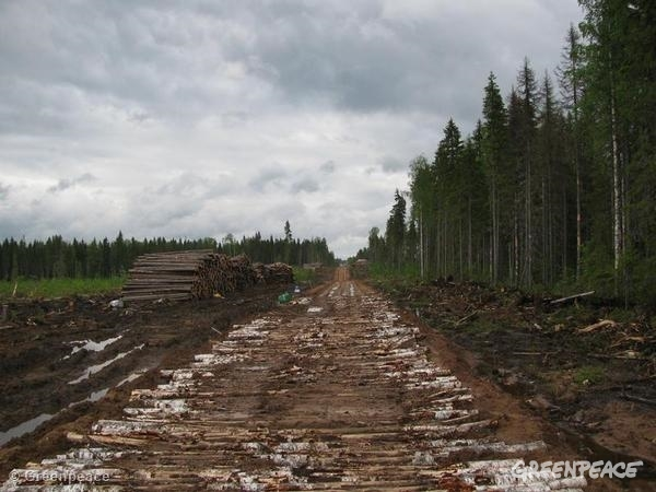 Road adjacent to large clearcut inside Dvinsky Forest (IFL) in the Solombabales (Boretskaya) concession area. 06/01/2012 © Greenpeace