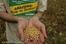 The Soy Moratorium, 10 years on: How one commitment is stopping Amazon destruction