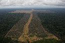 Brazilian Congress passes destructive new Forest Code
