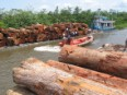 Illegal logs seized in the Amazon