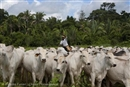 JBS recommits to Cattle Agreement in the Amazon
