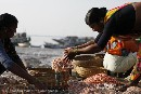 A case for protecting India's fisheries