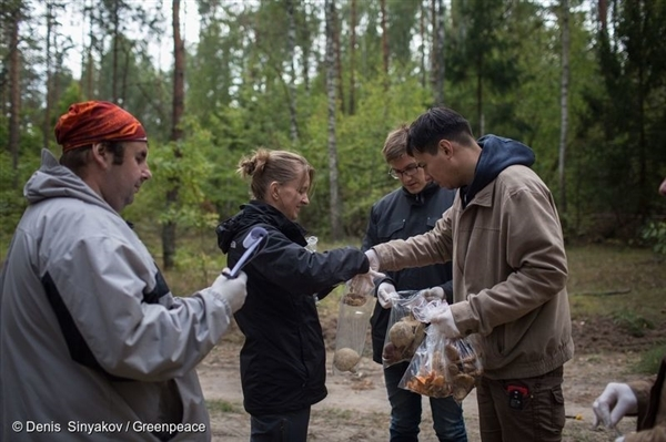 Greenpeace Russia takes samples of mushrooms and berries in a forest in the Bryansk region, Russia (Sept 2015)