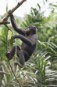 Congo rainforest needs greater protection