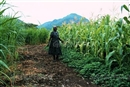 Sustainable intensification in Africa feeds greedy agribusiness, not people