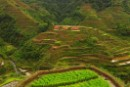 The Philippine Rice Terraces declared a GMO-free zone
