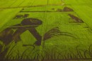 Aerial view of 'Rice Art' in Thailand's Central Plains