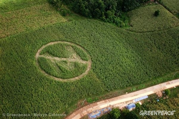 ID: GP0VTL GE Crop Circle Action Against GM Corn (Philippines: 2006)