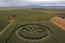 Crop Circles Appear on Three Continents