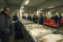 Fish from the North Sea is sold at a retail
