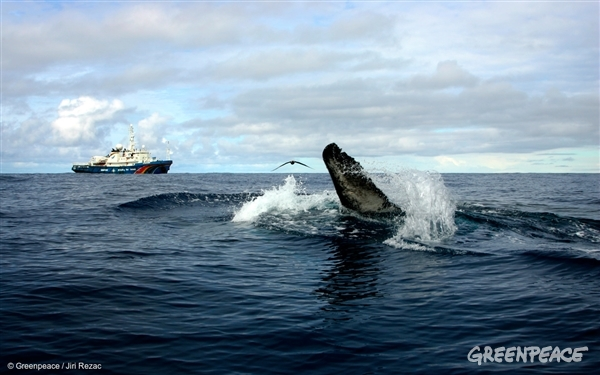 Humpback whale in Southern Ocean