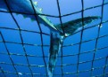 Last chance for bluefin tuna, too late for real conservation