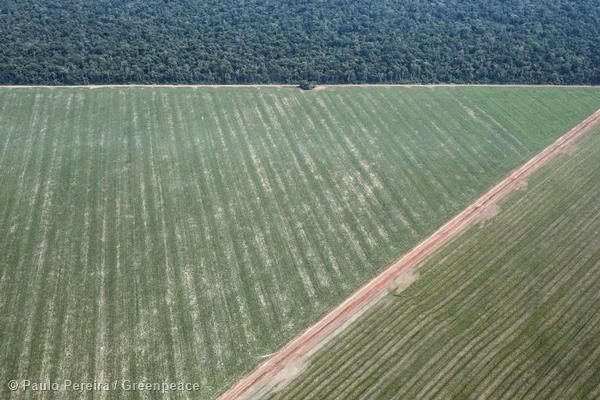 Deforestation in Mato Grosso. A deforested area and planted area. 18 Oct, 2014 © Paulo Pereira / Greenpeace