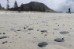 The first oil washed up onto the beach at Mt Maunganui five days