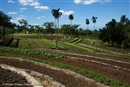 Seeing is believing: Growing food for people, with people and with nature in Cuba