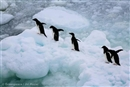 Protecting the wild south: Antarctica