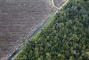 Global deforestation – Europe faces up to its dirty secret