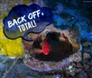 Oil companies' Amazon Reef drilling plans in big trouble