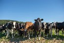 Targets a good first step but Fonterra must reduce the dairy herd