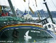 Greenpeace launches new educational website on anniversary of Rainbow Warrior bombing
