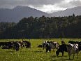 A global report out today could present a major opportunity for New Zealand agriculture.