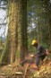 Clearcutting of Canada's temperate rainforest