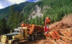 Clearcutting ancient temperate rainforest