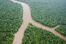The Amazon's Silent Crisis: Night Terrors
