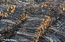 Commission slams weak implementation of EU law against illegal logging