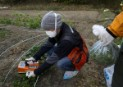 Greenpeace Identifies High Contamination Levels in Vegetables