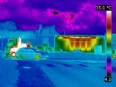 Thermography of Castor in Valognes